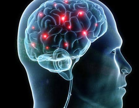 brain cerebro neurociencia