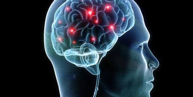 brain cerebro neurociencia