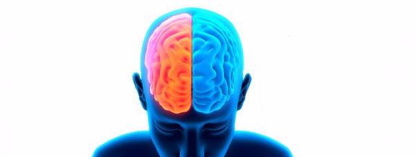 cerebro neurociencia y recursos humanos